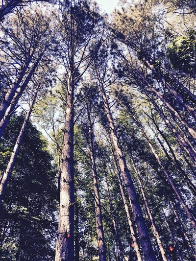 Electric Forest Forest Trees Forest Full Frame Backgrounds Pattern No People Day Low Angle View Plant Outdoors Nature Beauty In Nature Sunlight First Eyeem Photo