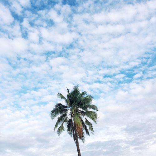 Beach Palm Palm