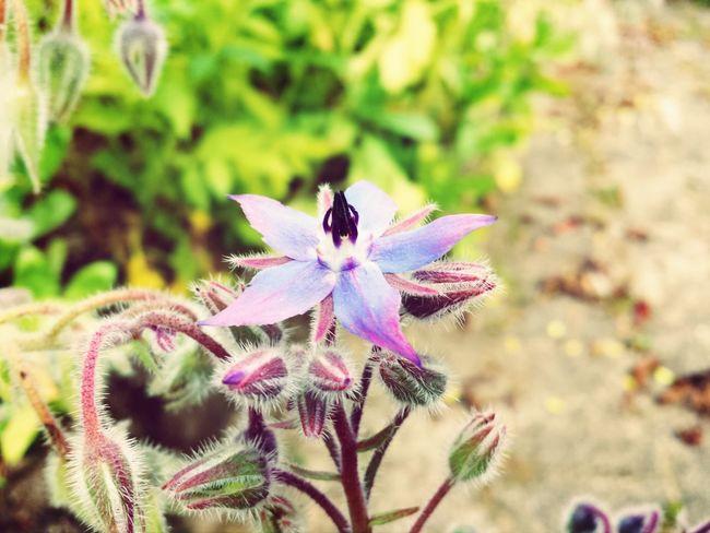 Flower Flowerporn