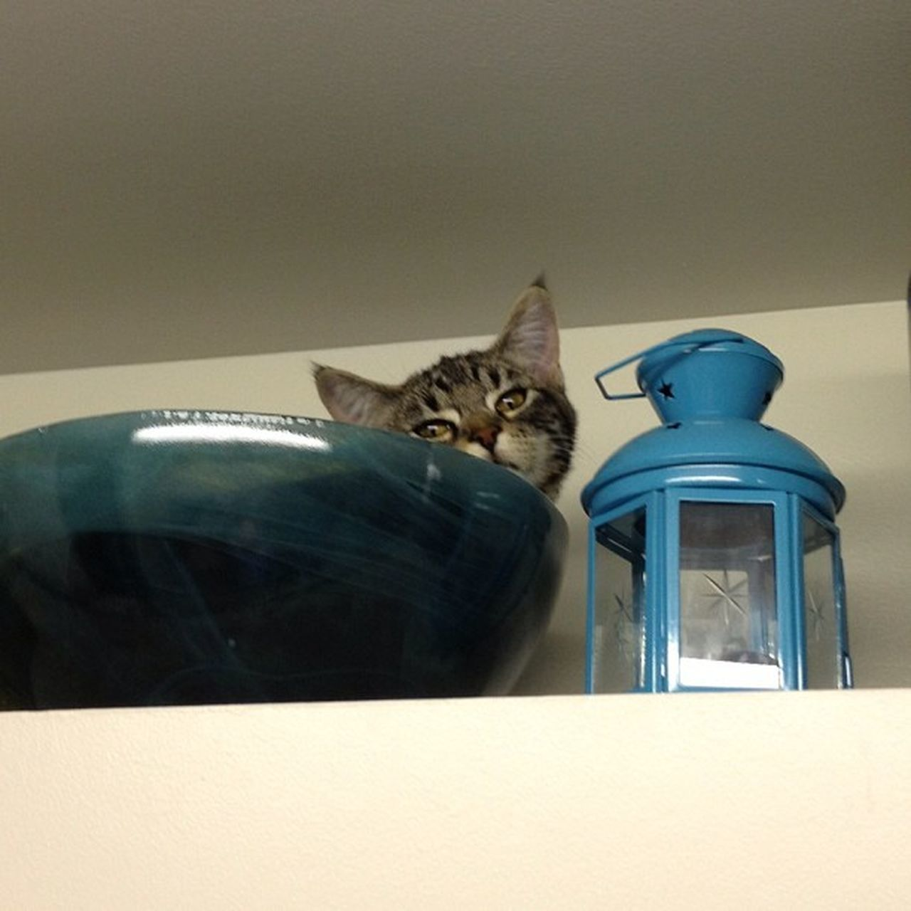 Cat In Bowl On Cabinet