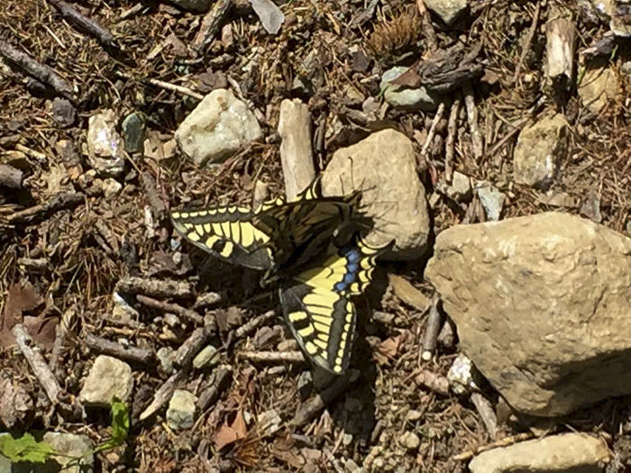 High angle view of butterfly on rock by sea