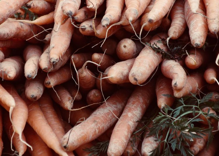 Carrots Colors Farmers Market Life Red The Week On EyeEm Carrot Carrots Close-up Fall Food Food And Drink Freshness Health Healthy Eating Healthy Vegetables Large Group Of Objects Nature No People Organic Outdoors Root Vegetable Vegan Vegetable Veggie Vitamin