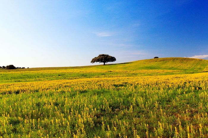 Forest Green Tree No People Landscape Zen Portugal Fresh Air Nature Nature Flower Alentejo,Portugal Alentejo Alentejo Lovers Alentejo Landscapes em Alentejo, Portugal Paint The Town Yellow Perspectives On Nature