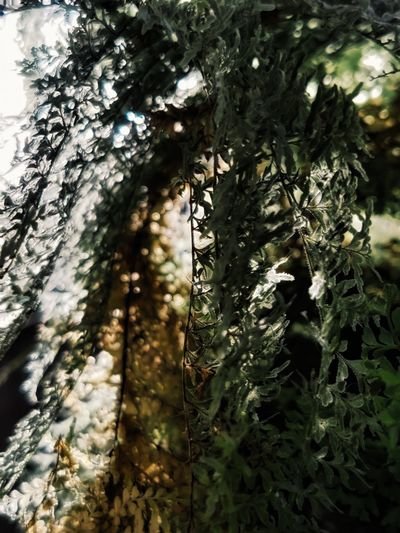 Low angle view of lichen growing on tree trunk