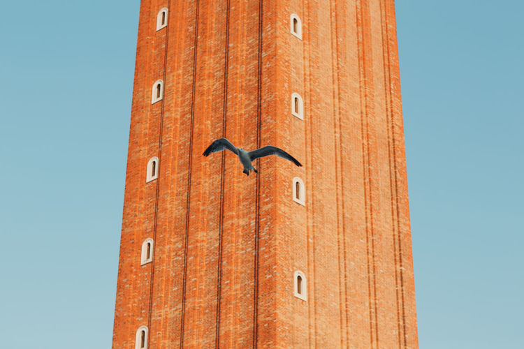 Low angle view of bird flying against tower in city