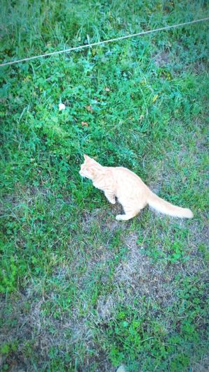 micio Cat Withe Grass High Angle View Day Green Color Field