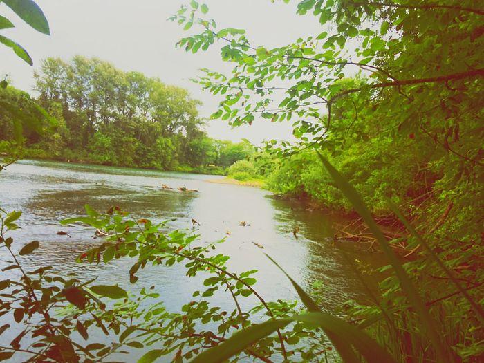 Willamette River  Essence Of Summer