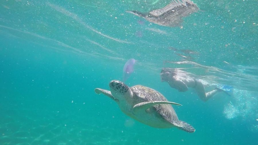 Sea turtle and scuba driver swimming underwater