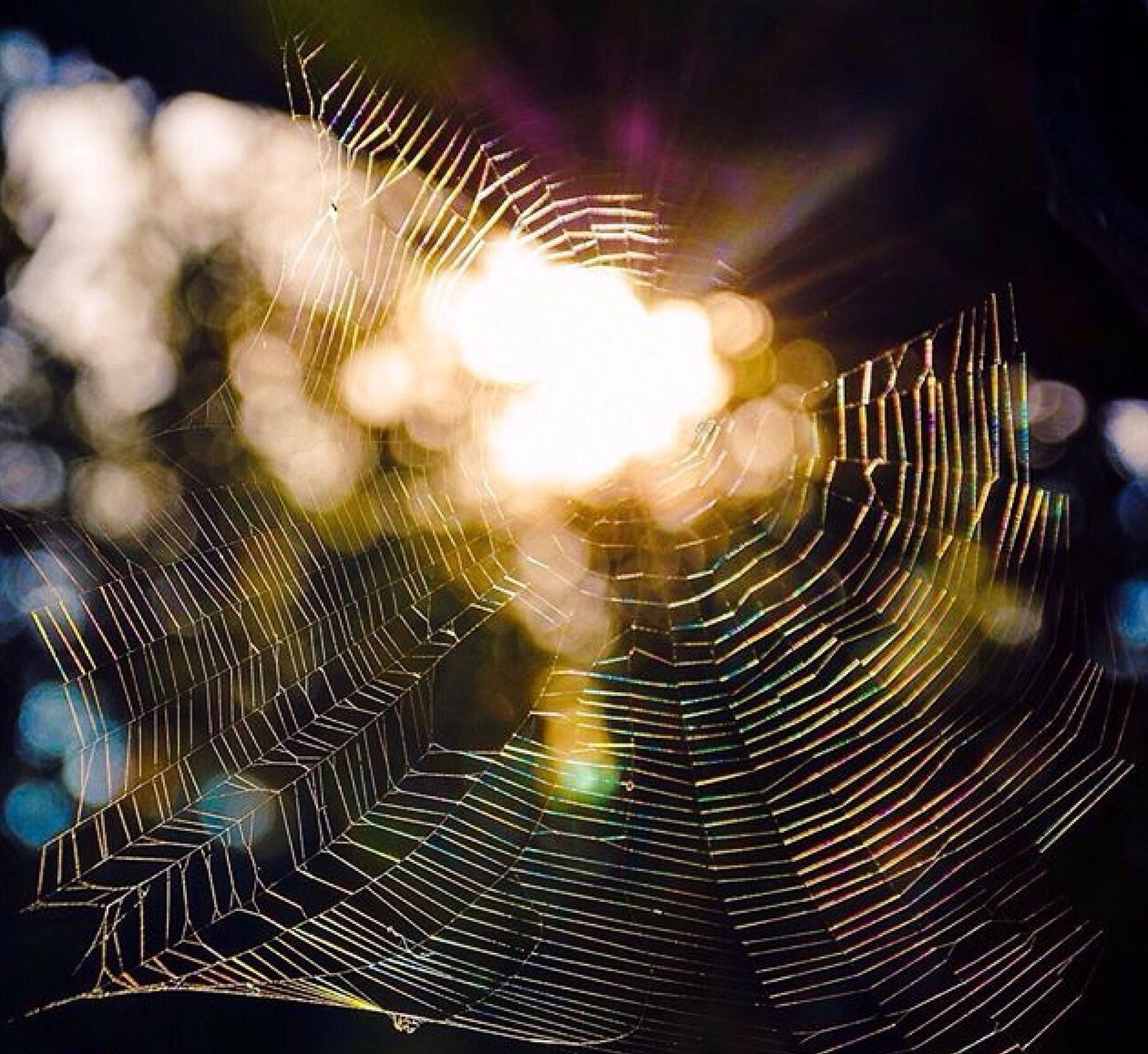 spider web, pattern, animal themes, water, close-up, focus on foreground, natural pattern, nature, indoors, spider, no people, night, motion, fragility, selective focus, wildlife, animals in the wild, one animal