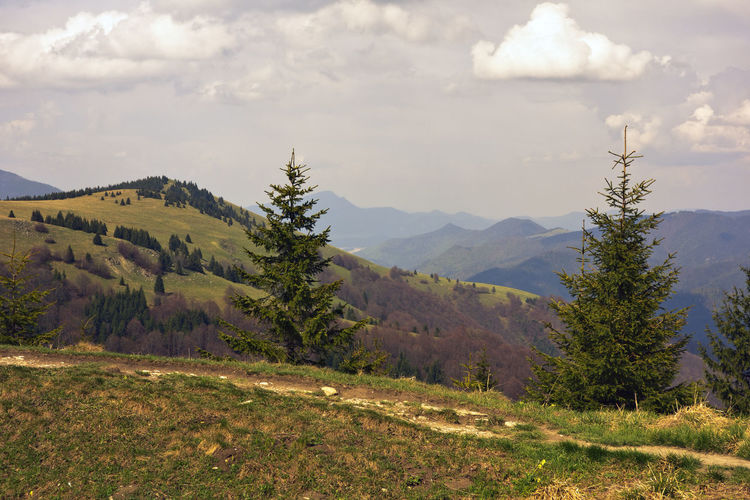landscape Velka Fatra Beauty In Nature Cloud - Sky Clouds And Sky Coniferous Tree Day Environment Green Growth High Land Landscape Mountain Mountain Peak Mountain Range Nature No People Non-urban Scene Outdoors Plant Range Remote Scenics - Nature Sky Tranquil Scene Tranquility Tree Zvolen