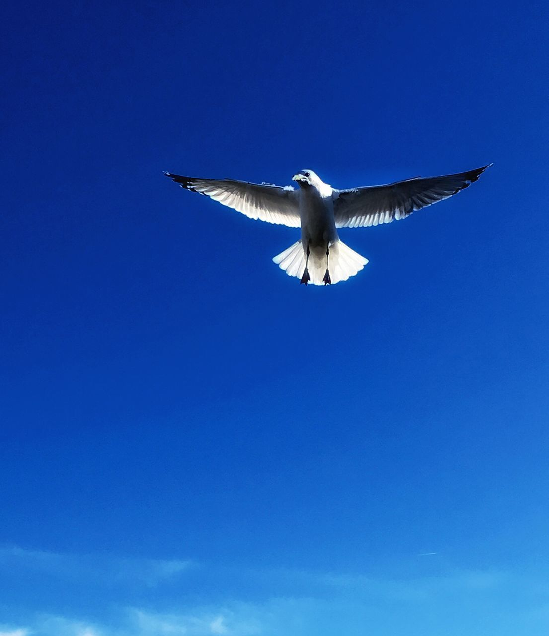Low Angle View Of Bird Flying Against Clear Sky