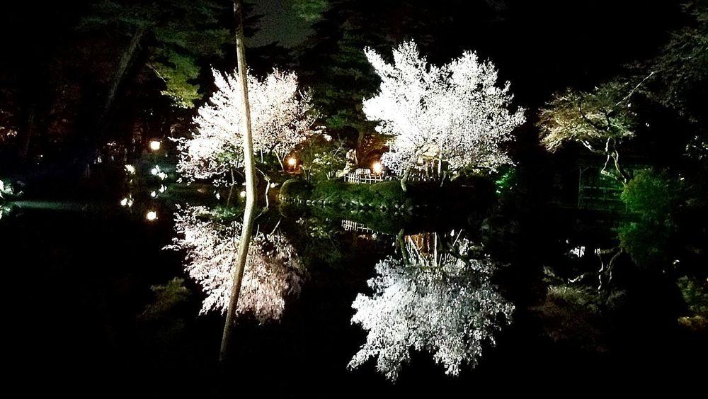 富山に現場調査のため来ています。昨晩は金沢に前泊しました。「兼六園へ行こう」という主人の提案で、夜の散策をしました。兼六園は一昨日の8日より無料開放期間な上に夜間のライトアップで21時30分までの営業時間。せっかく行くからと下調べをしてくれた主人のお陰で素敵な春の兼六園を堪能できました。感謝します。 兼六園 夜桜 夜桜ライトアップ 夜桜見物 金沢 お仕事 出張 Cherry Blossoms Hello World