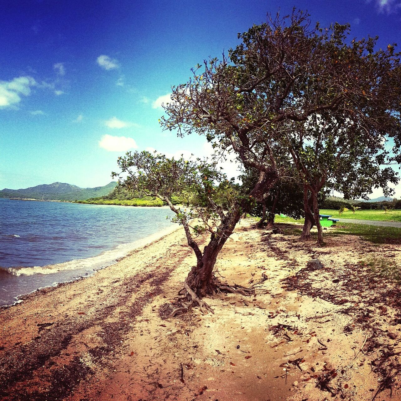tree, nature, beauty in nature, tranquility, scenics, tranquil scene, landscape, day, growth, sky, sand, outdoors, branch, no people, water, clear sky, grass