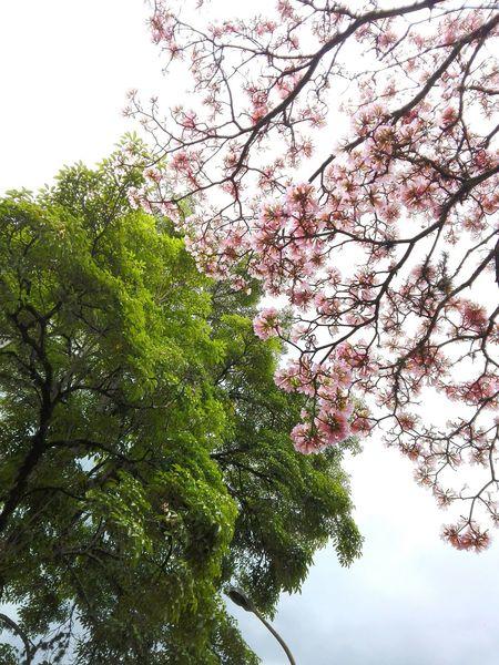 Beauty In Nature Ibagué la ciudad del ocobo, la música y las sorpresas