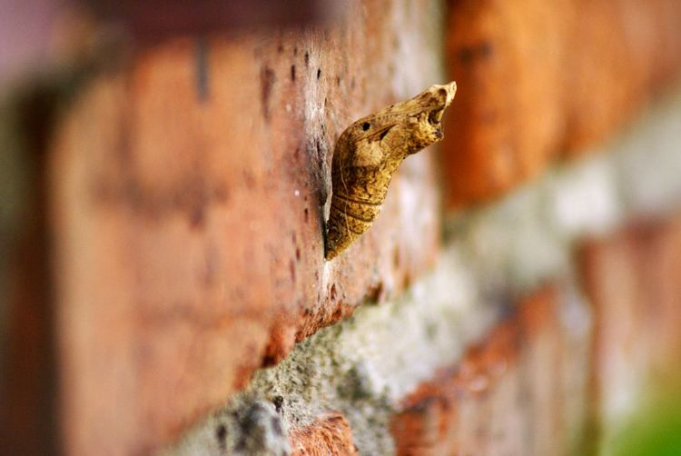 Close-up of cocoon on brick wall