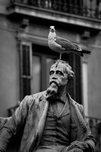 Portrait of bird perching on wall