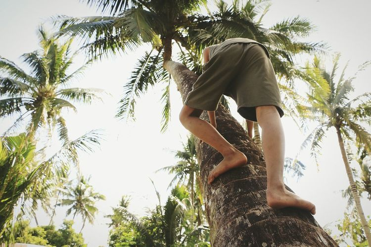 Low Angle View Of Man Climbing Coconut Palm Tree