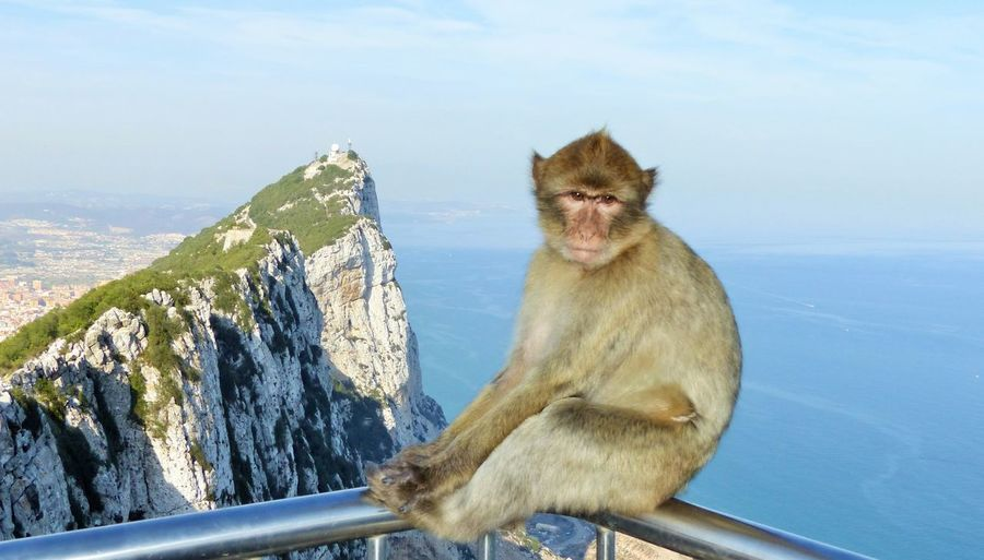Monkey in Gibraltar from KPJ Animal Themes Animal Wildlife Animals In The Wild Baboon Day Gibraltar Mammal Monkey Mountain Nature No People One Animal Outdoors Sitting Sky The Rock