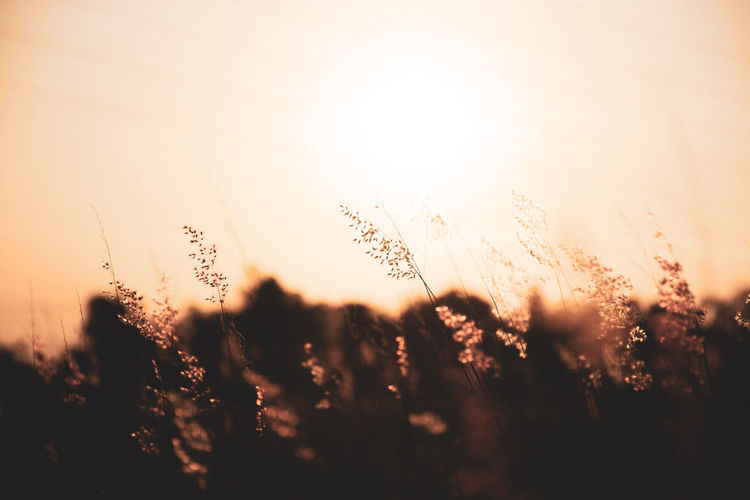 Sunset Sky Plant Field Nature Growth Beauty In Nature Tranquility Land Selective Focus Sunlight No People Sun Tranquil Scene Silhouette Outdoors Landscape Scenics - Nature Close-up Orange Color Lens Flare Brightly Lit