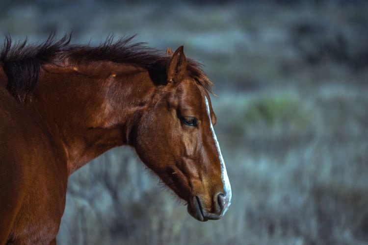 Horse Mammal