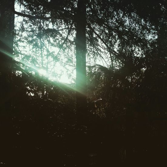 Sunlight First Eyeem Photo Sea Sochi Instagram Wood