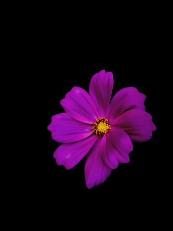 Flower Purple Pretty Nature Edited