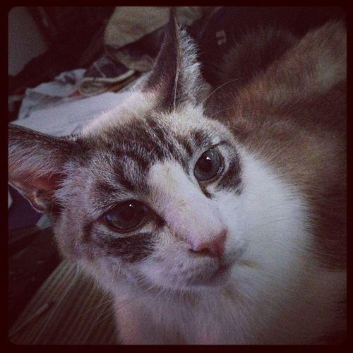 Ohhai Scotty Cat, what's up? Scottycat Cuddles