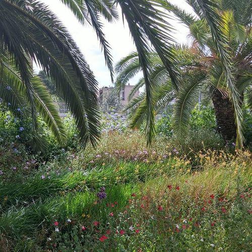 Parque  Park Puisto Parc Parcdejoanmiro Nature Luonto Kukkia Flowers Barcelona Bcndreamers Bcnexploradores Bcnexplorers Thebarcelonist