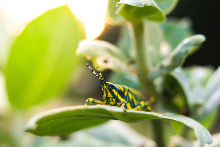 Worldphotographyday 50mm F1.8 Close-up Canon80d EyeEm Gallery Locking Up Canon Eos  Sitting On Leaf Blueandgreen Insect Photography