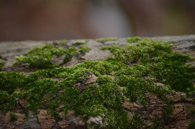 Moss Green Color Plant Close-up Food Food And Drink Vegetable Selective Focus Growth No People Freshness Nature Ingredient Day Wellbeing Healthcare And Medicine Herb Focus On Foreground Mushroom Healthy Eating
