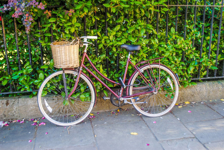 Basket Bicycle Bicycle Basket Bicycle Rack City Day Land Vehicle Mode Of Transport No People Old-fashioned Outdoors Parking Stationary Transportation A New Perspective On Life