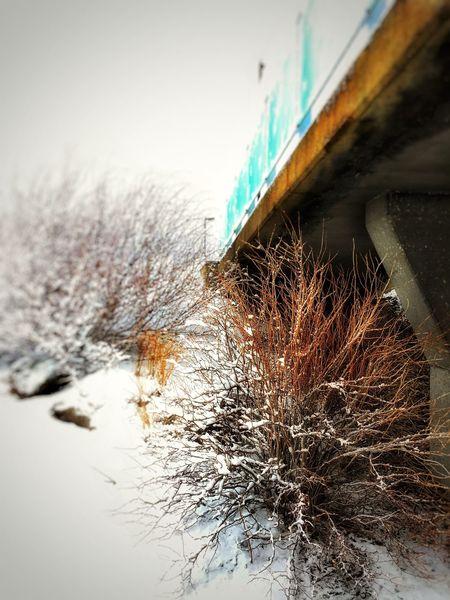 Showcase: January Januaryphotochallenge IPhoneography Winter Bushes