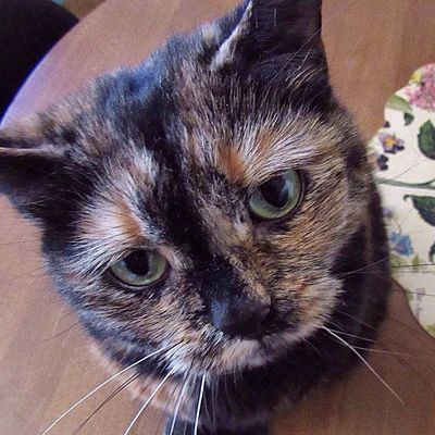 Are you up? It's Monday! 😄 Animal Themes Pets Domestic Cat Close-up Animal Head  Indoors  Feline Portrait