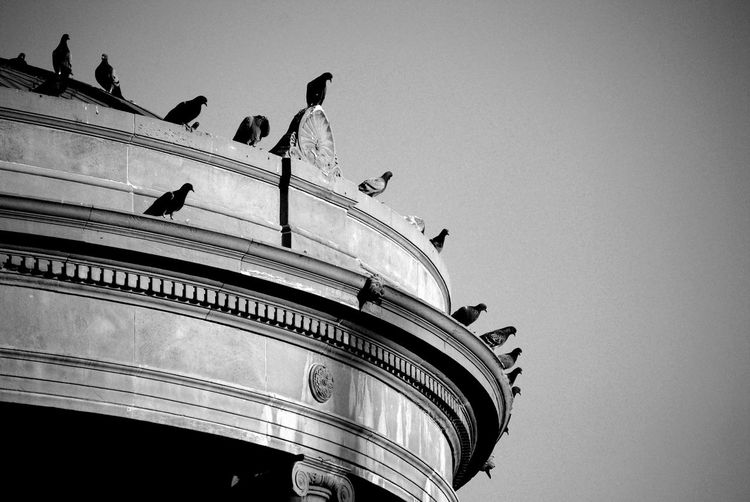 Animal Themes Architecture Architecture Birds Blackandwhite Clear Sky Day Low Angle View Morning No People Outdoors Sky Transportation Urban