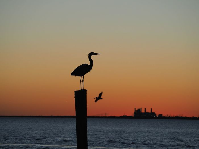 Seagull perching on wooden post in sea against sky during sunset