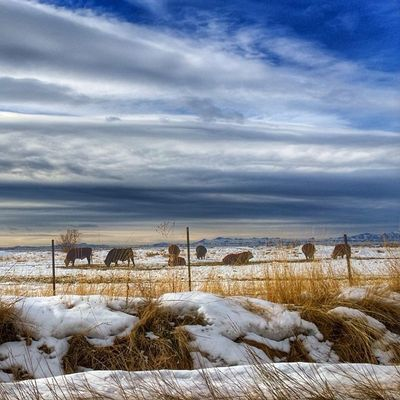 Great weather.. Utah Utahgram Westernlandscapes Landscape beautiful ig_utah instagood nature sky animals snow winter