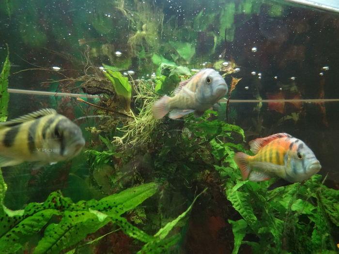 Fishes Animal