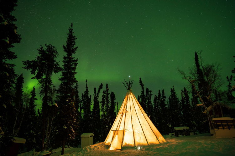 Northern lights (Aurora borealis) with starry sky above forest, Yellowknife, Canada Tree Plant Night Sky Nature Illuminated Star - Space No People Growth Architecture Green Color Dusk Outdoors Built Structure Scenics - Nature Beauty In Nature Tranquility Land Tent Astronomy