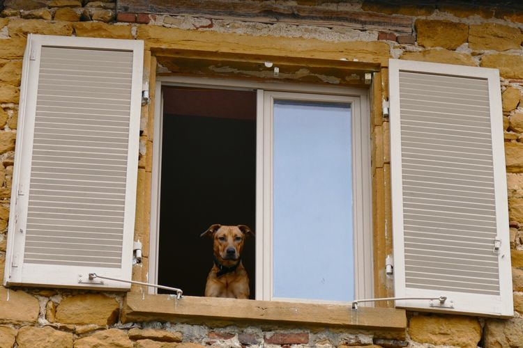 Low angle view of dog on window