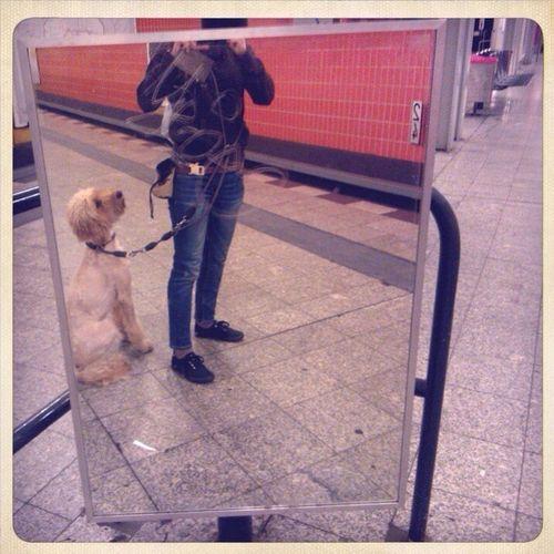 Aljoscha Subway Lovely Dog Heart Teaching The Youth  Underground City Life