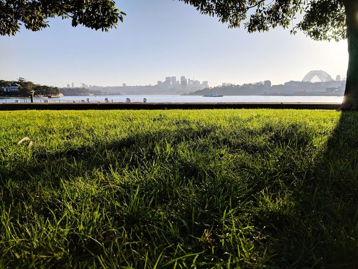 Sydney Harbour Bridge Sunrise Tree Rural Scene Rice Paddy Agriculture Water Field Vegetable Crop