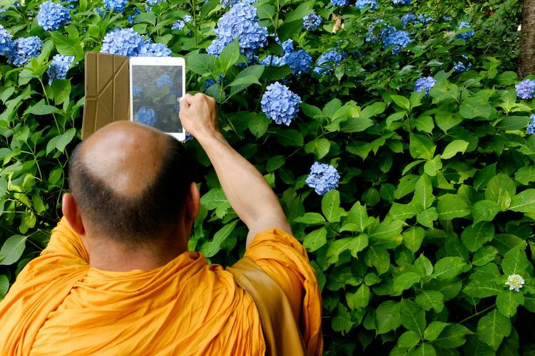 Rear View Of Monk Photographing Blue Hydrangea