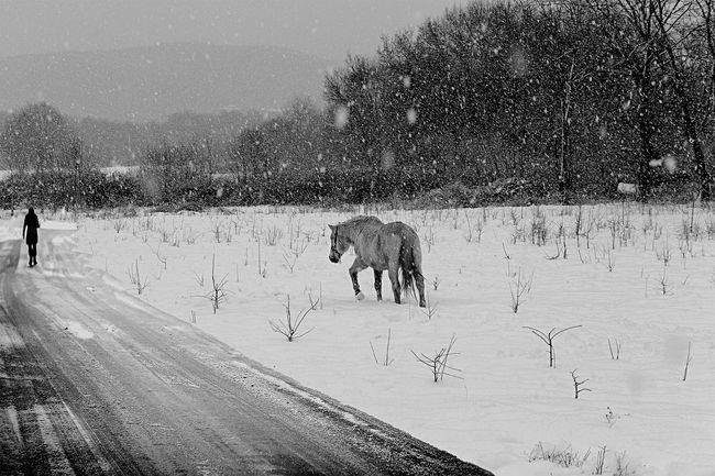 Snow... Istanbul #istanbuldayasam #istanbullove #anlatistanbul #instalike #followers #follower #follow #followmefollowyou #followme #mertce #mertcephotography #mertcephotographer #mustafamertulku #suretialem #1dakika #severekcekiyoruz #gulumseaska #hayatakarken # Suretialem Anlatistanbul