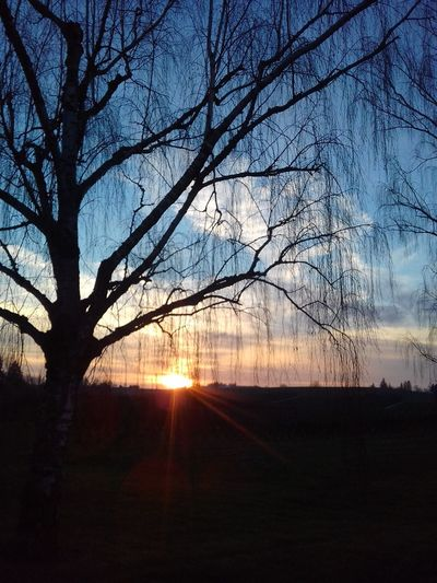 Sunset Nature Tree Sky Beauty In Nature Silhouette No People Sunbeam Bare Tree Scenics Rural Scene Sunset Cold Temperature Beauty In Nature Tree Cloud - Sky Tranquil Scene