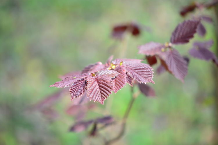 Close-up Plant Part Leaf Plant Beauty In Nature Growth Day Nature No People Selective Focus Vulnerability  Focus On Foreground Fragility Outdoors Autumn Flower Flowering Plant Tranquility Change Freshness Leaves