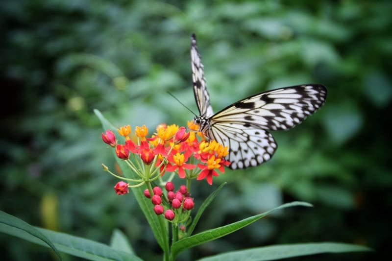 The earth is full of thresholds where beauty awaits the wonder of our gaze. Tadaa Community EyeEm Nature Lover Butterly