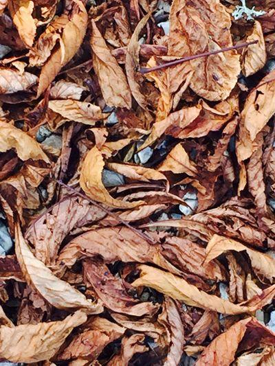 Les feuilles mortes, début d'automne. Dead leaves, Early autumn, Outdoors Nature