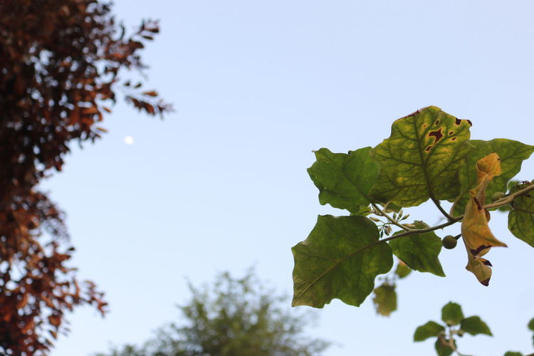 Plant Sky Leaf