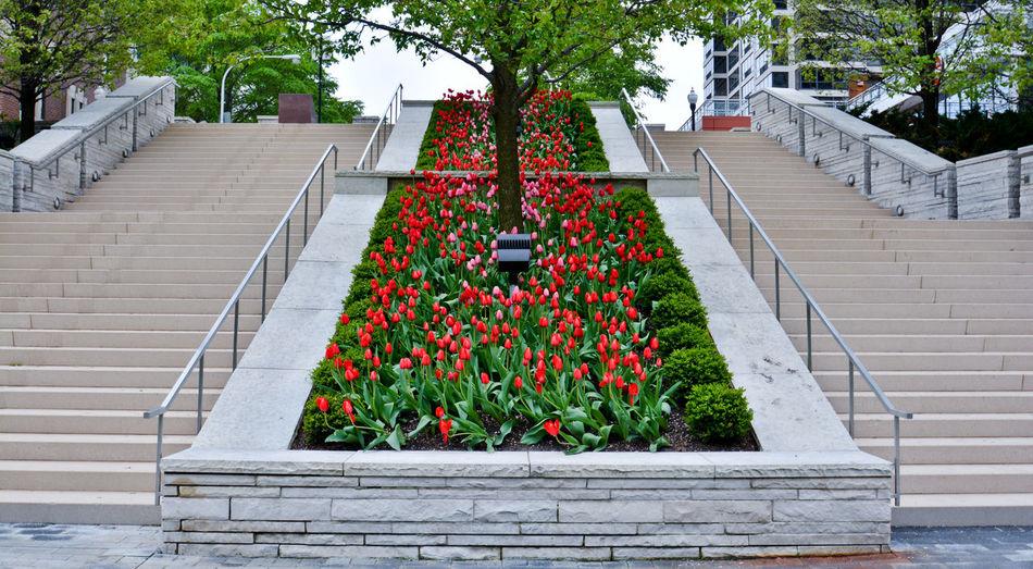 Plants on steps