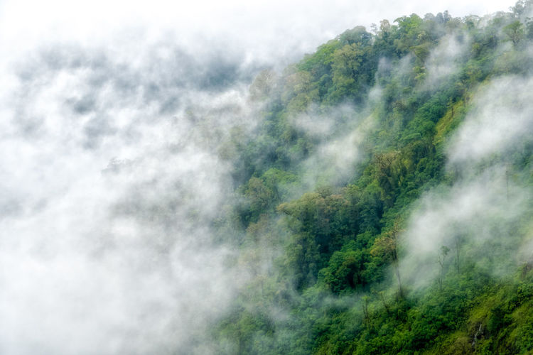 Fog obscures rainforest near Poas, in Costa Rica Beauty In Nature Costa Rica Day Green Color Growth Hazy  Mountain Nature No People Outdoors Rain Forest Rainforest Scenics Sky Tranquil Scene Tranquility Tree
